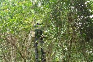 Bàng hoàng phát hiện người đàn ông treo cổ chết trên cây