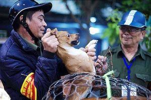 Hà Nội: Đề xuất cơ chế giải quyết vấn đề phát sinh khi bắt chó thả rông