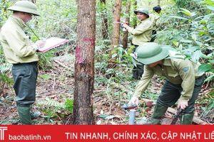 REDD+ ở Việt Nam giai đoạn 2 đánh giá chứng chỉ rừng tại Hà Tĩnh