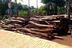 Chính phủ yêu cầu tỉnh Gia Lai triển khai cứu dân thủ phủ hồ tiêu