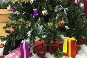 Tại sao lại chọn cây thông để trang trí ngày Noel?