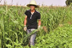 Tiến sĩ 'rủ nhau' về quê làm nông nghiệp organic