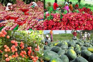 Thúc đẩy xuất khẩu nông sản sang thị trường Trung Quốc