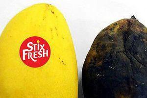 Hóa chất đặc biệt: 1 miếng dán nhỏ giữ trái cây tươi 14 ngày