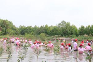 C.P Việt Nam trồng rừng góp phần bảo vệ môi trường xanh