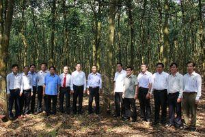 Đoàn công tác của Đảng ủy Khối Doanh nghiệp Trung ương thăm và làm việc với Công ty Cao su Phú Riềng