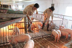 Nhiều tín hiệu khởi sắc của ngành chăn nuôi năm 2018