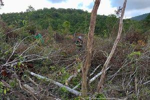 Xử lý nghiêm các đối tượng 'cạo trọc' 30 nghìn m2 rừng sản xuất