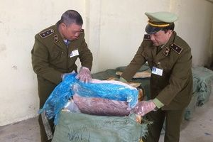 Tịch thu 1,5 tấn nầm lợn bốc mùi hôi, chuẩn bị mang đi tiêu thụ