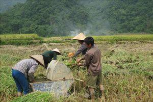 Đẩy mạnh đào tạo nghề, việc làm tại chỗ cho lao động trẻ nông thôn miền núi