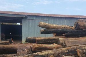 Vụ trùm gỗ lậu Phượng 'râu': Bắt thêm một giám đốc doanh nghiệp