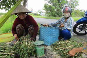 Cả làng đổi đời nhờ thả loài rau lớn như thổi, hái quanh năm