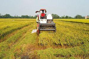 BẢN TIN TÀI CHÍNH - KINH DOANH: Gạo Việt đã xuất khẩu đi hơn 150 thị trường, 35,46 tỷ USD vốn FDI vào Việt Nam