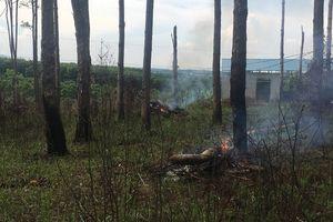Đắk Nông: Thu hồi một dự án giao khoán đất và rừng không hiệu quả