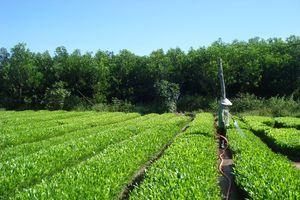 Tranh thủ thời tiết thuận lợi để trồng rừng