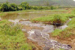Công ty mía đường Tuy Hòa xả thải ra môi trường