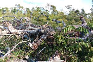 Gia Lai: Chuyển hồ sơ sang công an điều tra vụ mất 550ha rừng
