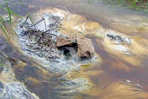 Tuy Hòa, Phú Yên: Nhà máy đường xả nước thải vượt quy chuẩn ra môi trường