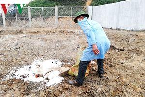 Dịch lở mồm long móng ở Hà Nội: Dân giấu, chính quyền bị động