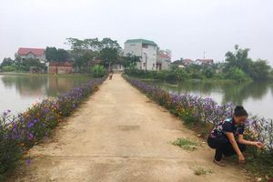Rực rỡ đường hoa ở Quốc Oai