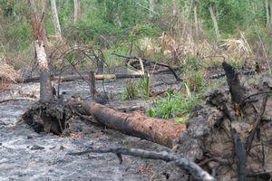 Xử lý nghiêm sai phạm trong giao khoán rừng tại Ban quản lý rừng phòng hộ Ninh Hòa
