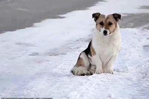 Chú chó đợi chủ suốt 6 tháng giữa trời lạnh âm 30 độ