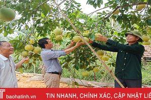 Nông dân liên kết với nông dân tăng giá trị sản phẩm