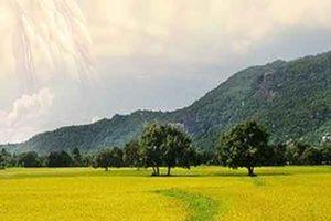 Nhà nông đổi đời nhờ gạo Việt 'lột xác' từ lượng đến chất