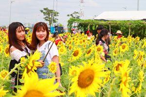 Ngàn người Sài Gòn rạng rỡ 'ùa đến' vườn hoa hướng dương chào năm mới 2019