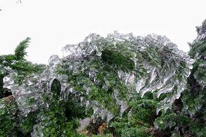 Du khách đổ dồn ngắm nhìn băng tuyết phủ trắng đỉnh Mẫu Sơn