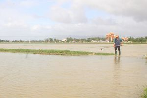 Bình Định: Hơn 4.000 ha ruộng mới gieo sạ có nguy cơ mất giống