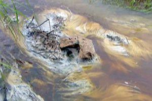 Thực hiện không đúng ĐTM, mía đường Tuy Hòa gây ô nhiễm môi trường