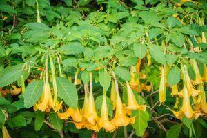 Những loại cây có độc tính cao bạn cần biết