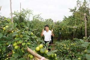 Táo muối Bàng La 'đại náo' thị trường Hải Phòng
