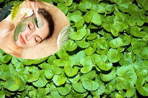 Những công thức từ rau má giúp trị sẹo rỗ nhanh chóng