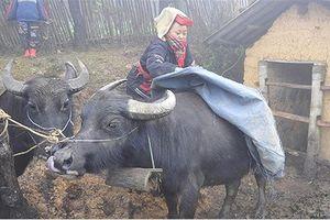 Lạnh giá ở Lạng Sơn: Lo dân thiếu đói, gia súc dịch bệnh