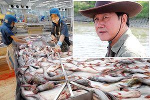 Vua cá Hùng Vương nói gì về việc thoát phá sản công ty?