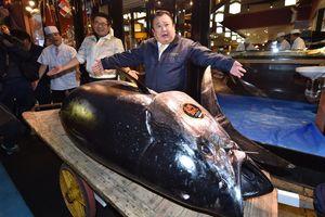 Con cá ngừ khổng lồ có giá 3,1 triệu USD