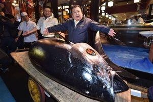 Lý do con cá ngừ gần 300 kg được mua với giá kỷ lục gần 3,1 triệu USD