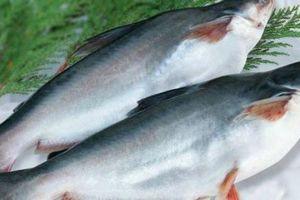 Mỹ thành thị trường tiêu thụ cá tra lớn nhất, 'vua cá tra' Hùng Vương lại ảm đạm!