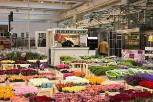 Hình ảnh bên trong chợ hoa 'khủng' ở Paris