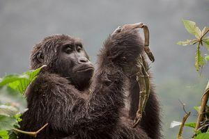 14 bức ảnh về động vật và thế giới tự nhiên hoang dã 'đốn tim' người xem