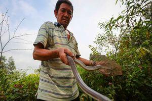 Ly kỳ 'sát thủ' gần 20 năm trong nghề săn rắn, bắt chuột ở Sài thành