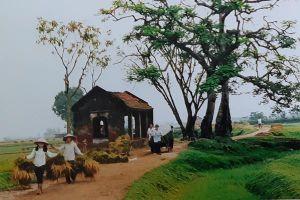 Làng quê Việt Nam qua các bức ảnh đi cùng năm tháng