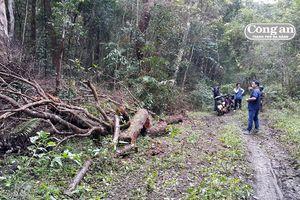 Nhân viên bảo vệ rừng thuê người... phá rừng