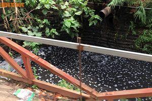 Nước thải xả ra môi trường ở La Phù: Sở Xây dựng Hà Nội nói gì?