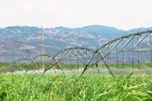 Thành Thành Công - Biên Hòa tham vọng đánh chiếm thị trường đường ASEAN và EU