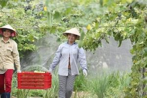 Quỹ đầu tư Mỹ rót vốn vào công ty thực phẩm hữu cơ Việt Nam