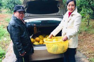 Khu vườn gần 100 cây bưởi sai trĩu quả của diễn viên Chiều Xuân