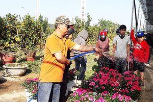 Đà Nẵng: Chợ hoa Tết Kỷ Hợi 2019 khởi điểm đấu giá 4,4 triệu đồng/lô